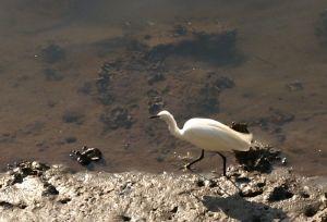 元安川の鳥