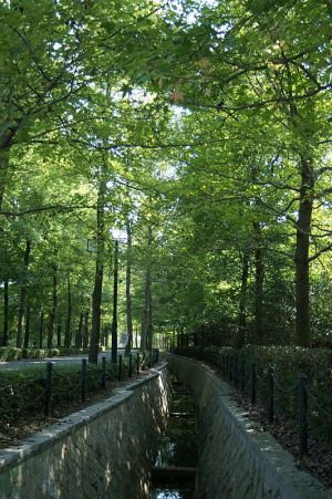 広島市広域公園の紅葉