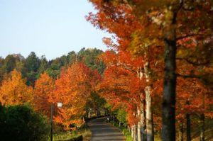 広島広域公園の紅葉