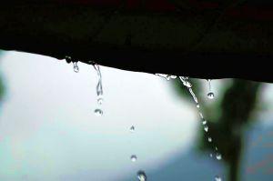 雨の植物公園2