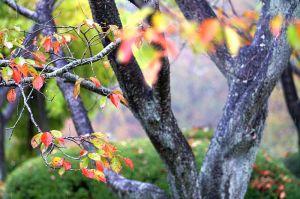 雨の植物公園4