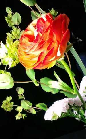 CA004 花