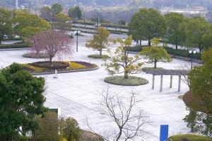 広島市広域公園の桜