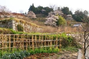 広島市奥畑地区の春