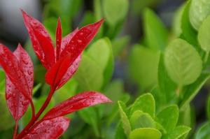 雨のヒロシマ