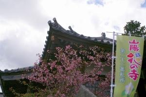 棲真寺の花風景