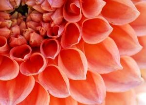 花のトリミング