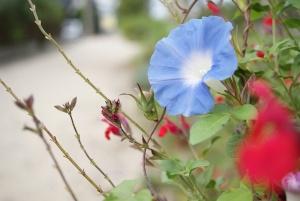 雲いずる国の花