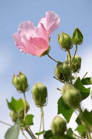 奥畑の花畑2