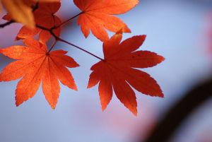 紅葉ひろしま