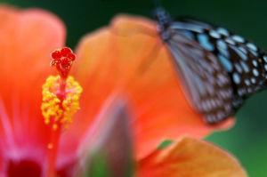 花と蝶とAV