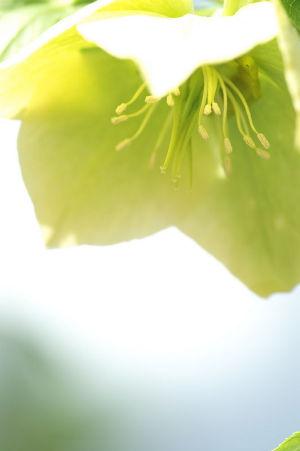 旬の花便り