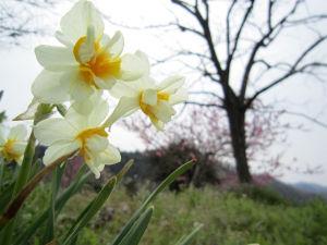 里の春(2)