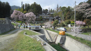 神原の桜情報2