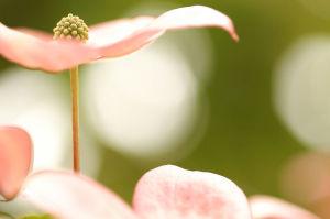 奥畑の花壇