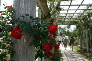 Wakunaga-garden2