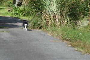 八幡高原のネコ