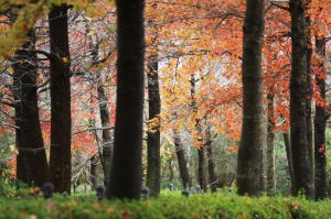 今日の広島広域公園