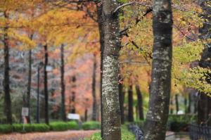 今日の広島広域公園2