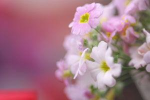 植物公園・花マクロ