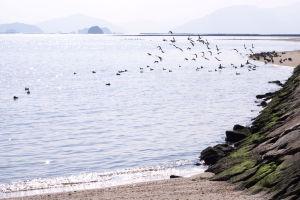 広島・みずとりの浜公園