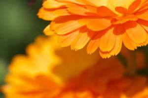 奥畑の花撮り