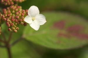 安佐南区奥畑の花