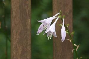 Botsuの花たち