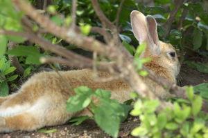 ウサギの島