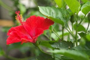 花の写真を