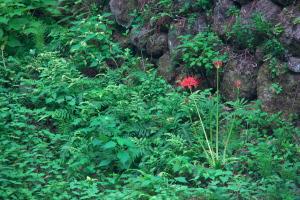 石見の大森4