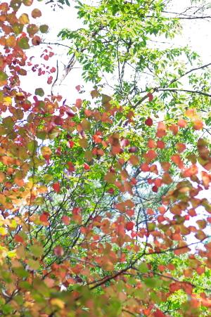 潜水艦と秋の色
