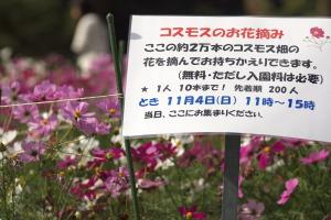 花Photo
