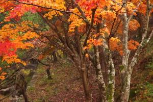 雨の紅葉散策
