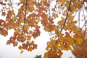 雨の日の紅葉撮り