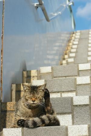 ネコの坂道