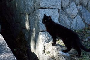 ネコの坂道2