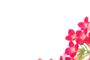 花を撮りたい