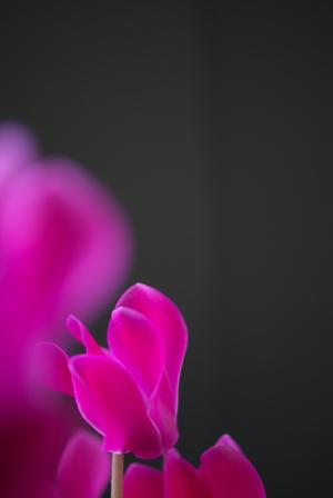 今日の花マクロ