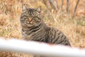 比治山の野良猫