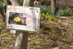 フクのつく花