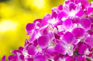外の花、内の花