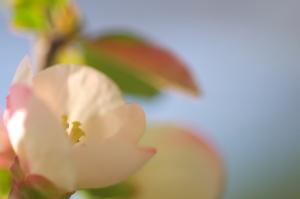 ご近所の花撮り