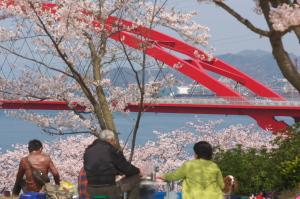 桜の音戸と護衛艦