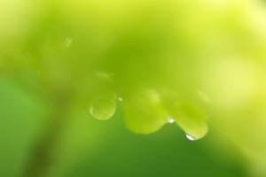 雨中の花マクロ