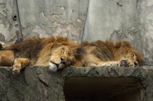動物園スナップ