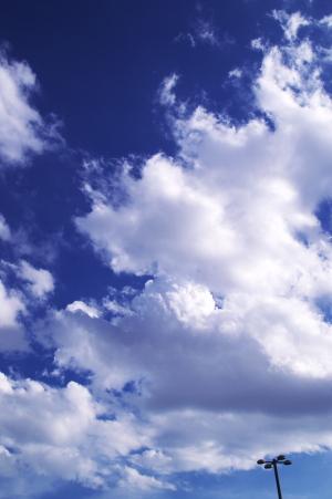 雲とワン子と