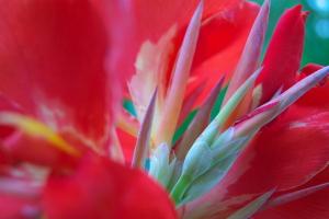 夏の花と陸の華