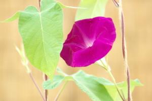 赤いクルマと夏の花