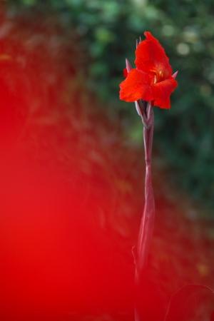 今日は花など